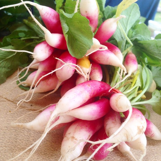 Gorgeous radishes that were perfect just simply sliced and sprinkled with a dusting of fleur de sel